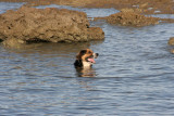 Taboo having an early morning dip