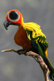 Funny Bird IMG_6148.jpg