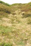 Trjárækt 2007