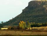 The neighbouring farm Boschfontein's poplars