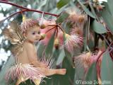 Gaby :The Gum Blossom Fairy