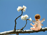 The Cherry Blossom Fairy