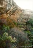 Bushman Paintings lie hidden under this sandstone overhang