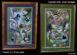 Australian bird photo montages by Cheryl Ridge