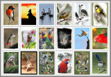 australian wildlife and bird list