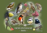 Small birds of the Victorian bush ~ Australia ~ photo montage by Cheryl Ridge