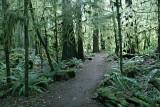 Pacific Rain Forest