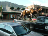 Bronze Elk in Jackson.JPG
