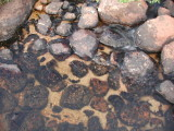 Fish Creek Stones.JPG