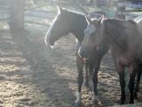 Sunlight on horses.JPG
