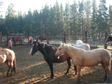 Sunlit horses.JPG