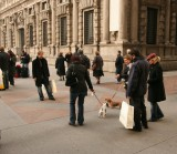 Walking the dog (Milan style)