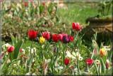 A day in the park - Cismigiu Gardens