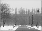 A cold day in the park