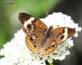 butterfly8.jpg