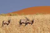 Namibia05
