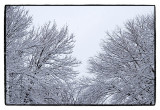 _MG_7781 winter wf.jpg