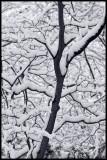 _MG_7684 snow cwf.jpg