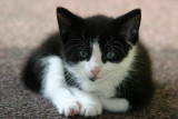Dorus one of the little kittens