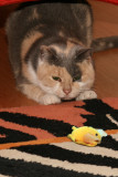 Sita and the toy