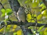 Field Sparrow 5170
