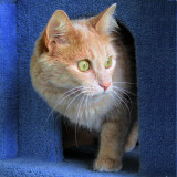 Shelter Cat Edit