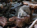 Flying Squirrel ontop mushrooms