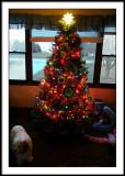 nov 25 tree
