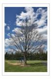apr 19 tree