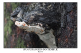 Detail of tree in Sanjusangen-Do