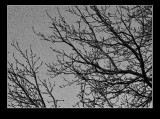 wintertree2.jpg