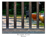 Scare Cat