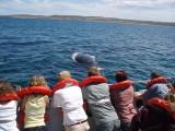 Right Whales at Peninsula Valdes