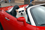 Man! am I ever a cool looking dog