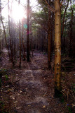 Lyminge Forest