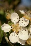 Ripe Blossom