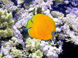 Bright Yellow Fish