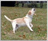 Beagles_MHF_D2X_1772_sm.jpg