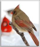 Cardinal_D2X_1969.jpg