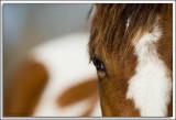 Horse_D2C_8589.jpg