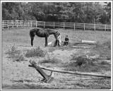 Me_Horse_2.jpg