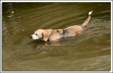 Beagles_D2C_2161.jpg