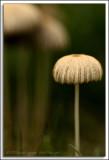 Shrooms_D2X_4748.jpg