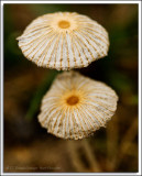 Shrooms_D2X_4750.jpg