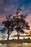 Mangue at sunset