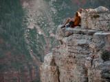 NorthRim Grand Canyon, AZ