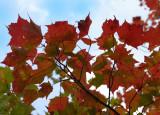 fall073.jpg