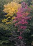 fall074.jpg