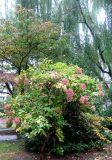 Hydrangea, Dogwood & Willow Tree