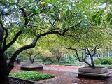 Crab Apple Trees & Garden View